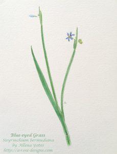 Long-stemmed blue flower with six petals